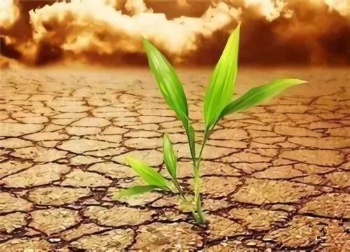 農田土壤修復